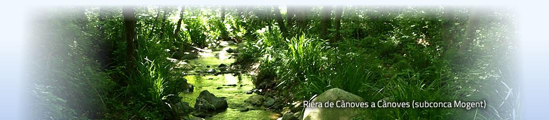 Besos-Tordera.cat - Riera de Cànoves